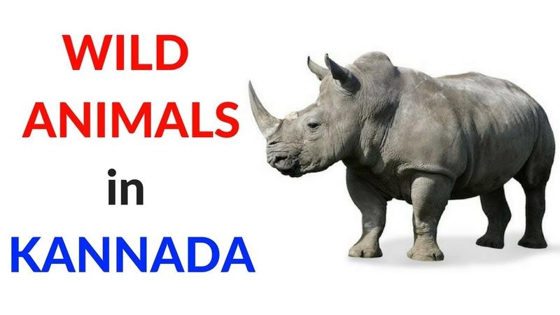 Wild Animals in Kannada - Learn Kannada