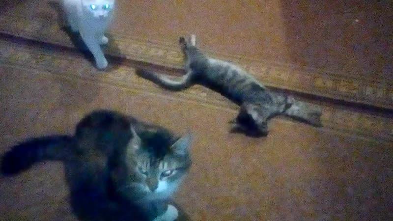 мои бластерные коты
