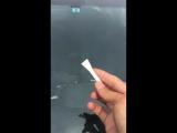 Как удалить защитный скотч с лобового стекла?