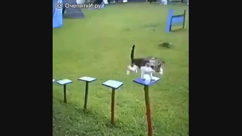 Полоса препятствий для кошки