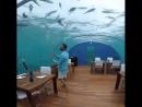 Conrad Maldives Rangali Island.mp4