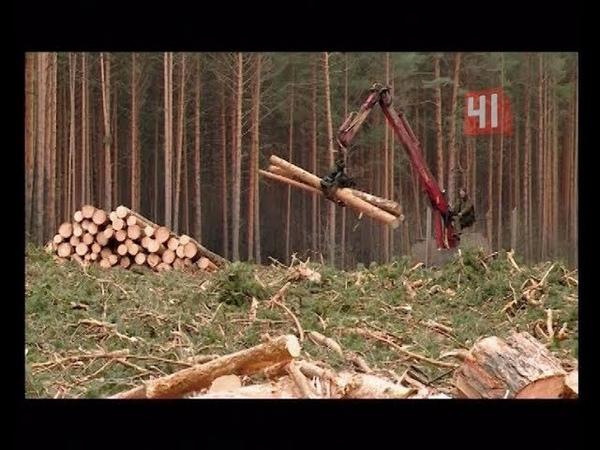 Вырубили тропу здоровья под велодорожки Новости