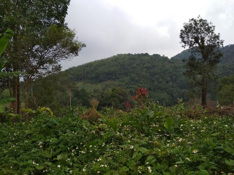 кофейная плантация с горах Таиланда
