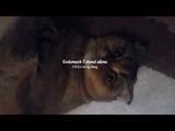 Godsmack-I stand alone (C.K.R.C) cover by Mihey