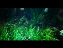 Дом моря в Вене Неоновые рыбки
