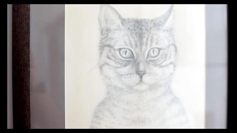 Кошка Нежа. Выставка ZOOлогия