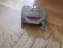 Как орет лягушка жаба! Очень смешно!