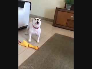 Пой со мноооой, странная, жёлтая собака!