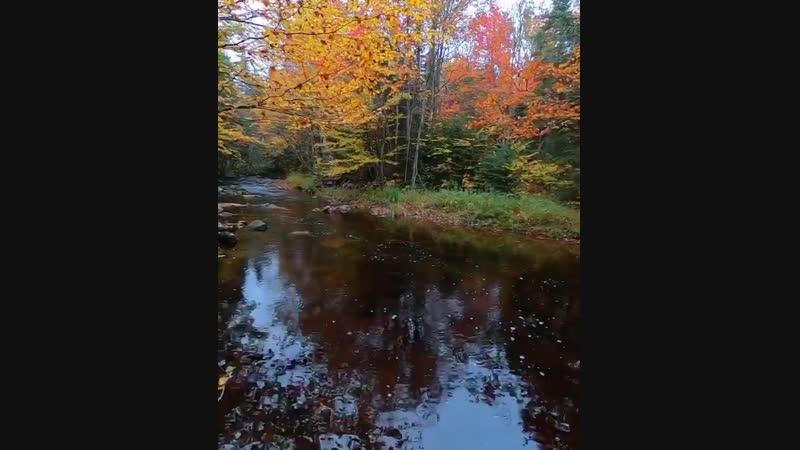 Осень 🍁💛