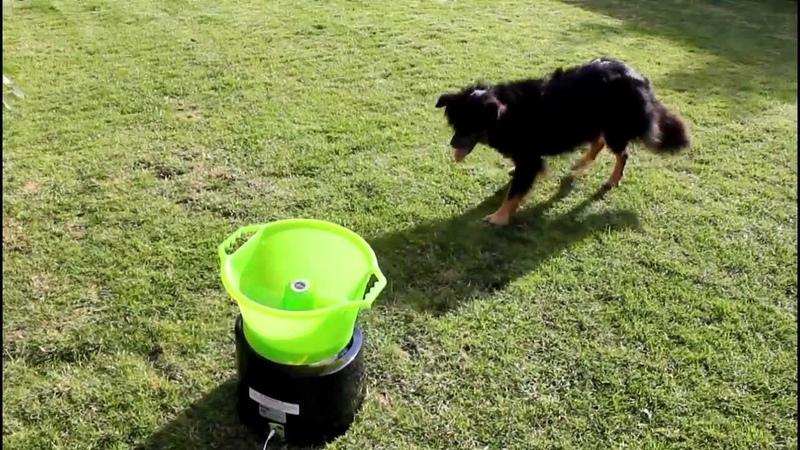 GoDogGo G3 dog ball thrower in action