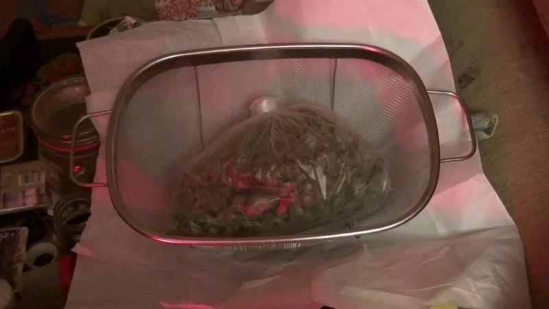 Житель Королева выращивал коноплю на кухне