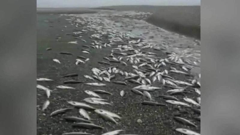 ВРоссии рекордный улов лосося, новместо магазинов тонны рыбы оказались вкамчатском лесу. Новости. Первый канал