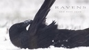 Ravens and first snow. Corvus corax.