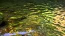 紅葉を映す軽井沢の白糸の滝・4K撮影