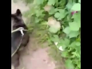 Чем котик отличается от собачки