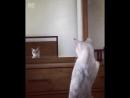 Котейка и зеркало