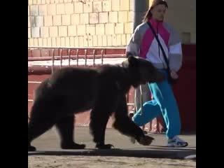 Tommy cash выгуливает медведя