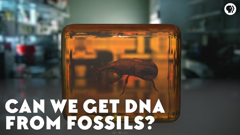 Can We Get DNA From Fossils