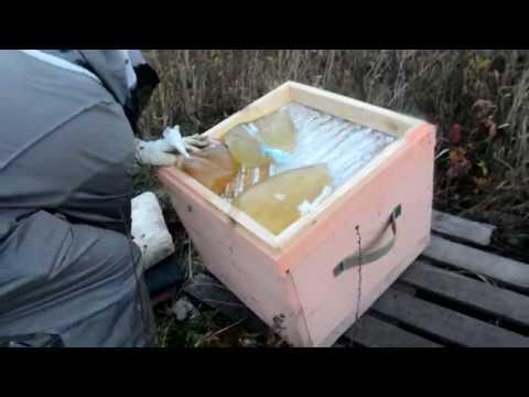 Пчеловодство | Когда кормить пчел осенью сахарным сиропом? Обработка от клеща биваролом
