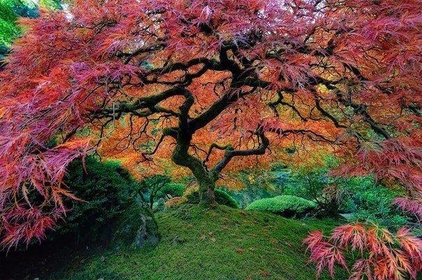 10 самых великолепных деревьев в этом мире