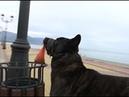 Пес Мурчик убирает мусор на пляже в Сочи