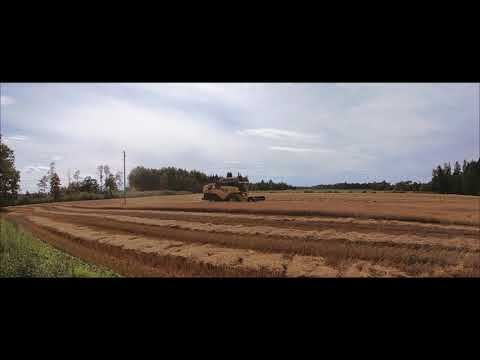 New Holland CX 8070 [Harvesting oats][Real time and sound][Latvia][Video by Farmer_Ren]