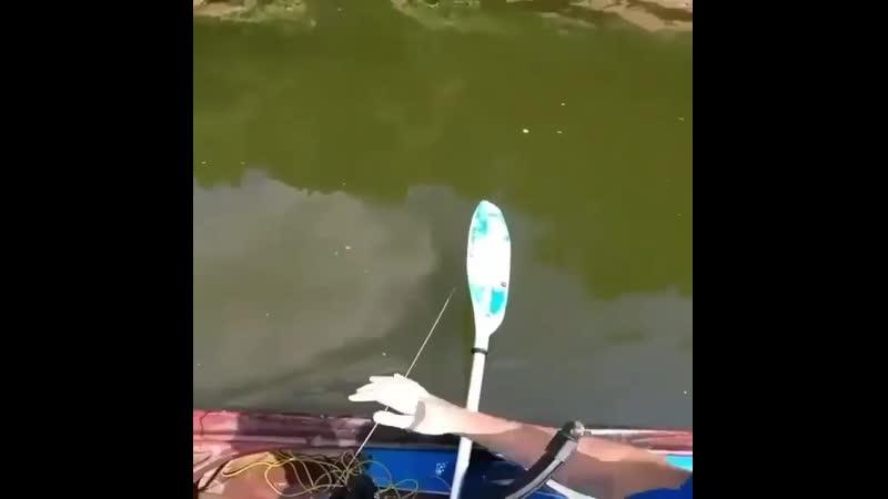 Кто так рыбачил