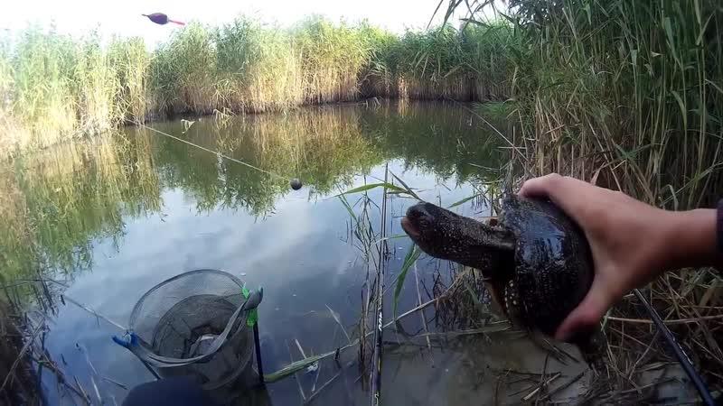 Ловля ПОДЛЕЩИКА на поплавок _ Рыбалка в тихой заводи