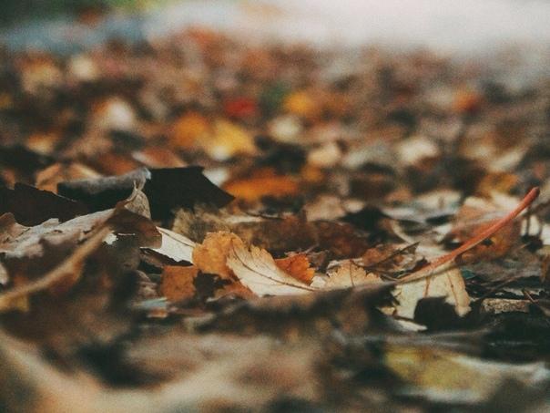 — есть два вида осени: 1. ясная, красочная, счастливая осень, со всеми этими тыквами, яблоками, свечками и замечательной едой 2. мрачная, тёмная, жуткая осень с пасмурным хмурым небом, тёмными