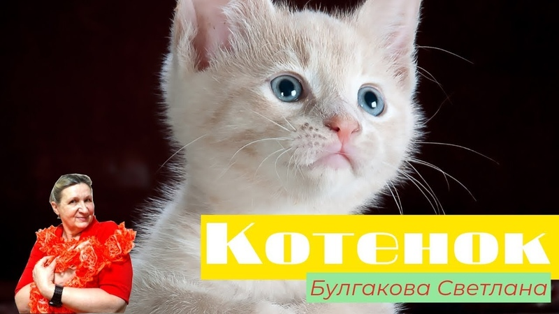 Котенок - Булгакова Светлана
