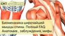 Биомеханика широчайшей мышцы спины Полный FAQ Упражнения заблуждения мифы