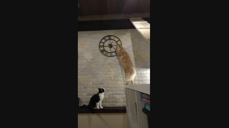 Сладкий торопит часы