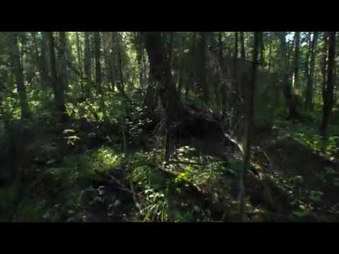 Лесной Танец Таёжное царство официальное видео 2018 4K