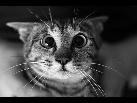 Superrr Funny CATs 4
