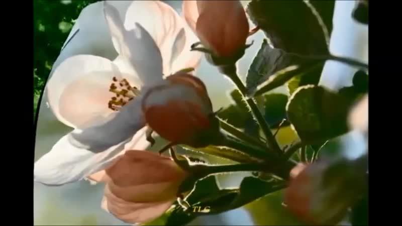 Мудрая песня из кинофильма Неодинокие