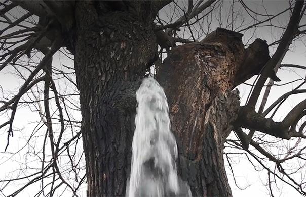Дерево -фонтан в Черногории На юго-востоке Черногории, в небольшой деревне Диноша, растёт очень старое тутовое дерево (шелковица), которое во время дождя превращается в фонтан.Что же там