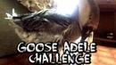 GOOSE ADELE CHALLENGE