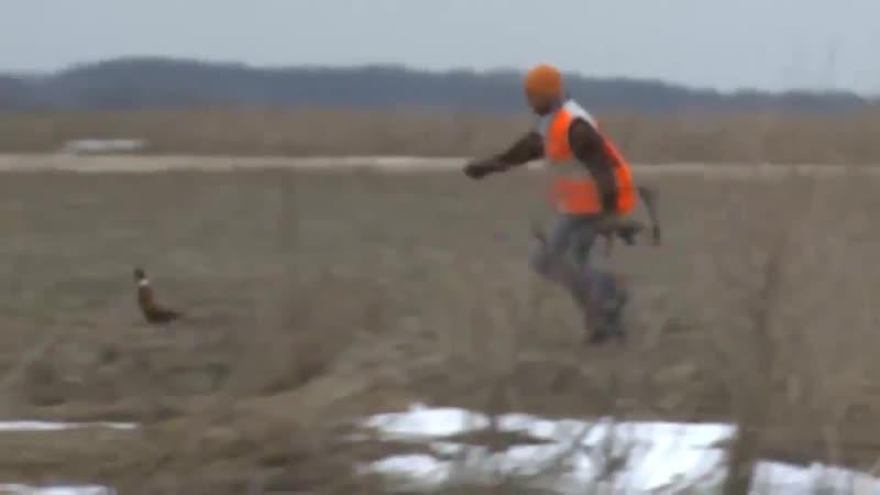 Охотник бросает лук в убегающего фазана