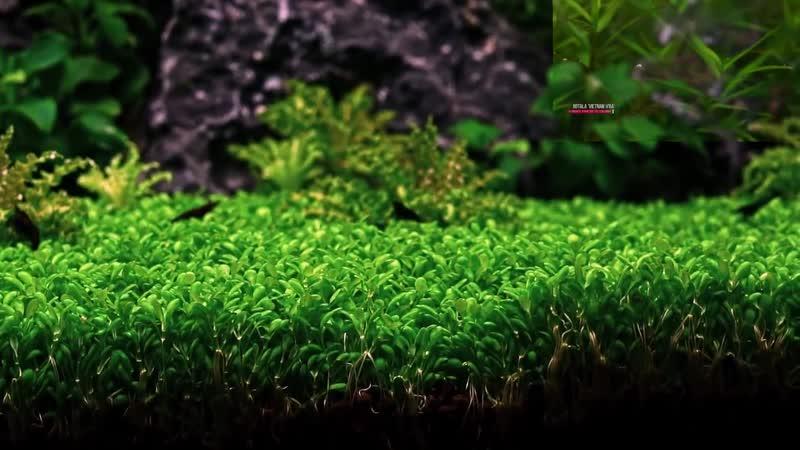 Planted Nano Aquarium Can you succeed with DIY CO2