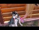 DIANA DI Один день моя собака мой ребенок! Нянчусь с собакой как с ребенком 24 часа челлендж! Луна ребенок!