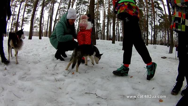 5 Winterdogfest Winter dog fest 2019, Песочин, 10022019, собаки, зимнии забавы