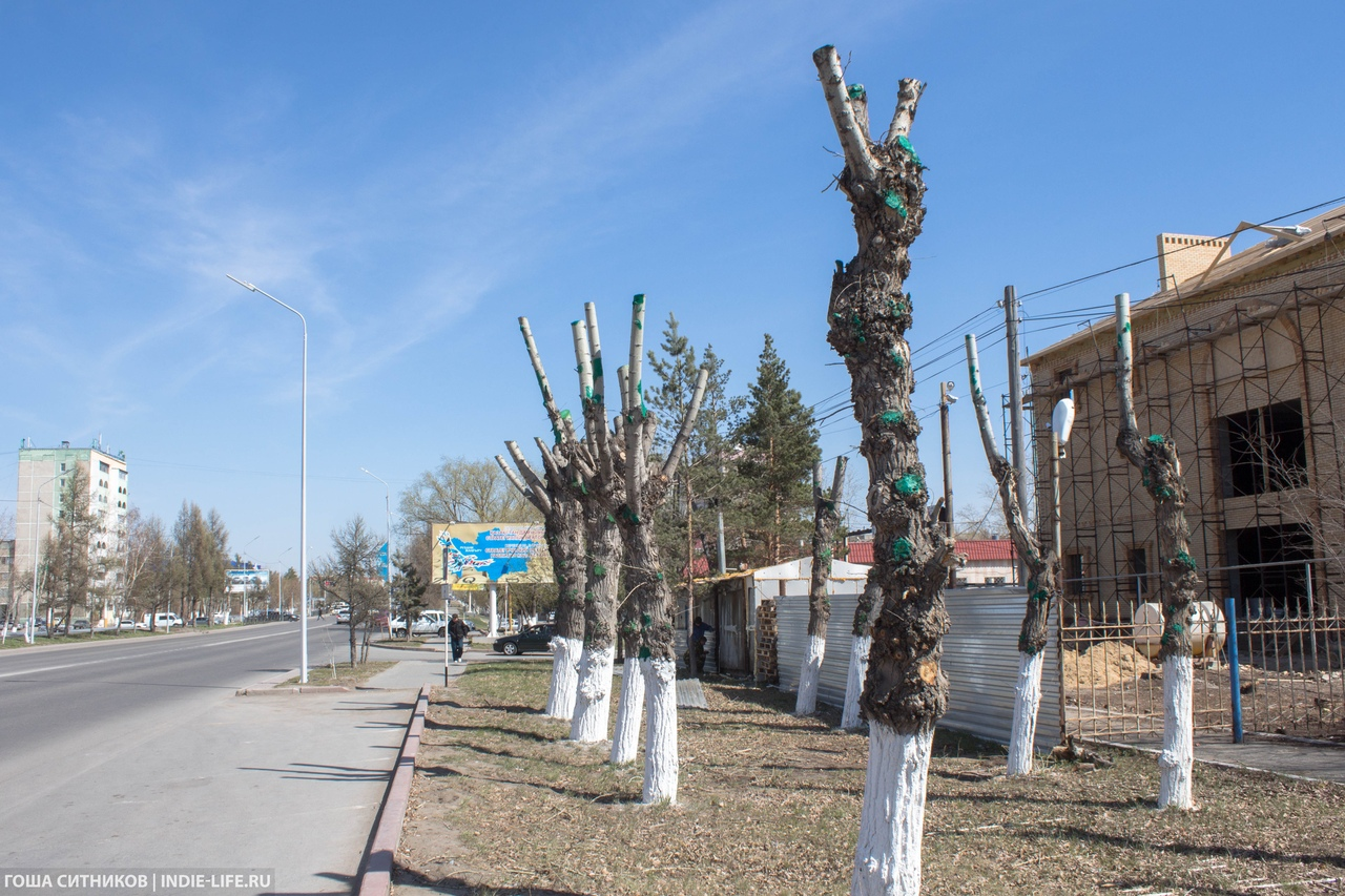 Кронированные деревья