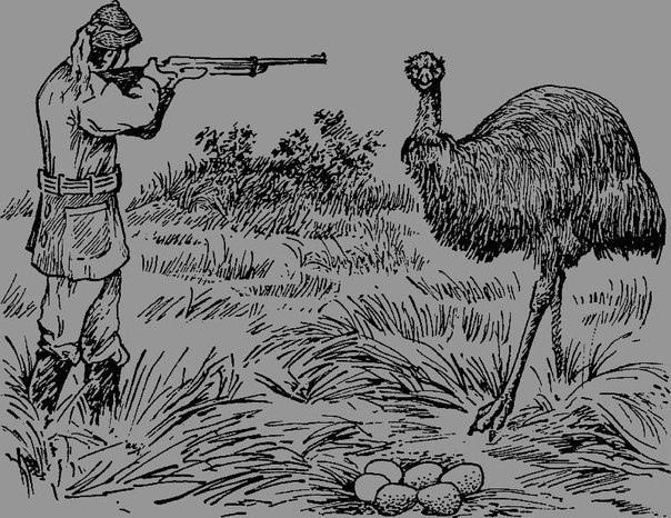 В 1932 году Австралия затеяла войну с эму После Первой мировой войны большое количество бывших военнослужащих Австралии начали вести хозяйство в западной части Зеленого континента, основав там