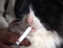 Котик курит сигаретуОЧЕНЬ МИЛО