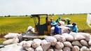 Máy Kéo Lúa Giữa Trưa Các Nông Dân Vẫn Làm Việc Không Biết Mệt Mỏi XoSo DayRoi