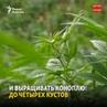 Канаде вступил в силу закон о легализации марихуаны