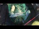 Интервью от 17 октября Рыбалка в подмосковье Три пескаря