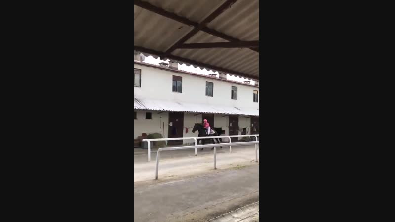 Twilight10th Kristen Stewart montando um cavalo com uma roupa de hipismo rosa Nasci pra ver isso