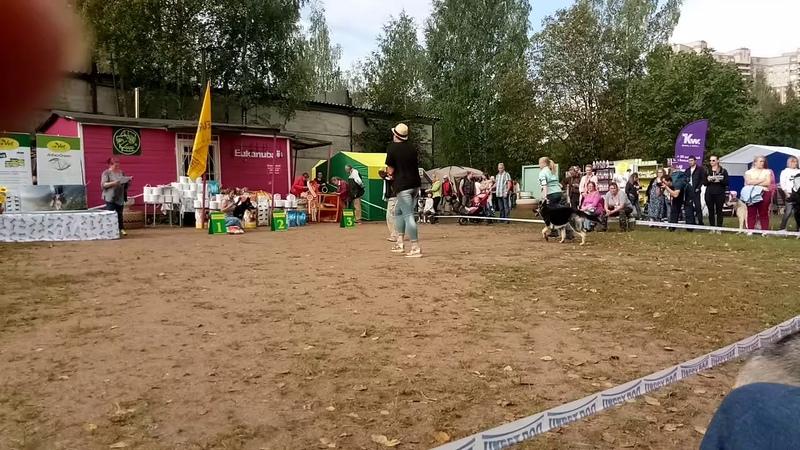 9 сентября 2018 г. ЧК эксперт Реваз Хомасуридзе (Москва)