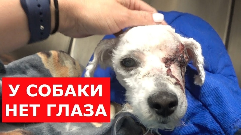 Собаке удалили глаз.Она почти потеряла веру в людей.Ветеринарное ранчо